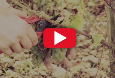 Vidéo Promotionnelle - Domaine Gigou